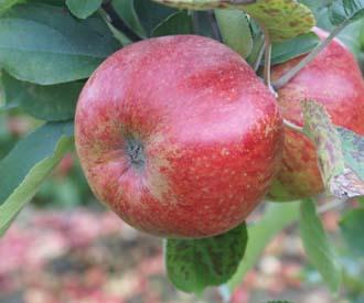 Apple - Breitling