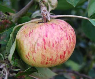 Apple - Seaton House