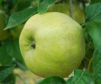 Apple - Swaar