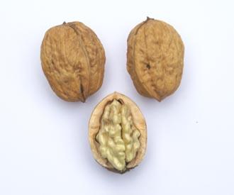 Walnut - Buccaneer