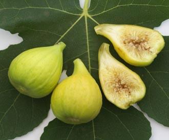 Fig - Madeleine des Deux Saisons
