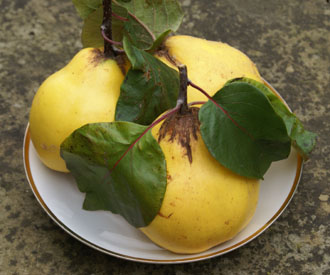 Quince - Isfahan