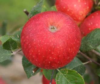 Apple - Jefferies