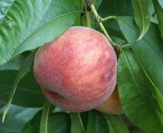 Peach - Gorgeous