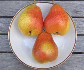 Pear - Forelle