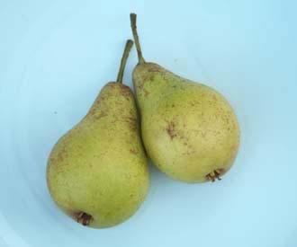 Pear - Jargonelle