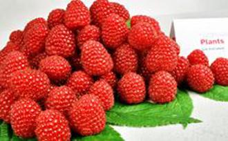 Raspberry - Polka