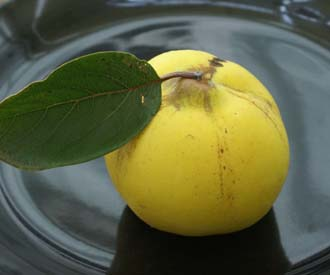 Quince - Serbian Gold