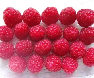 Raspberry - Erika